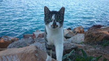 Torrevieja controla las colonias de gatos sin sacrificios.