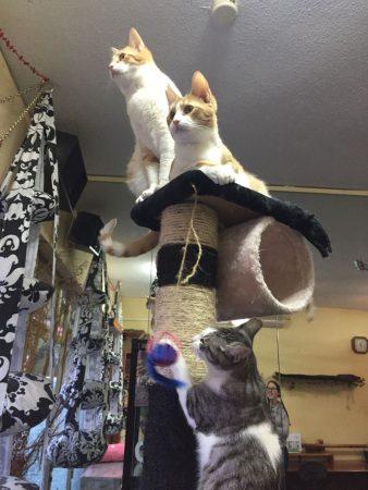 Huéspedes gatunos