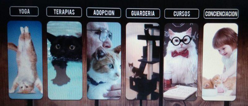 Captura de la página web de Cat Relax.