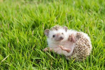 La curiosa fauna que habita dentro de la Universidad